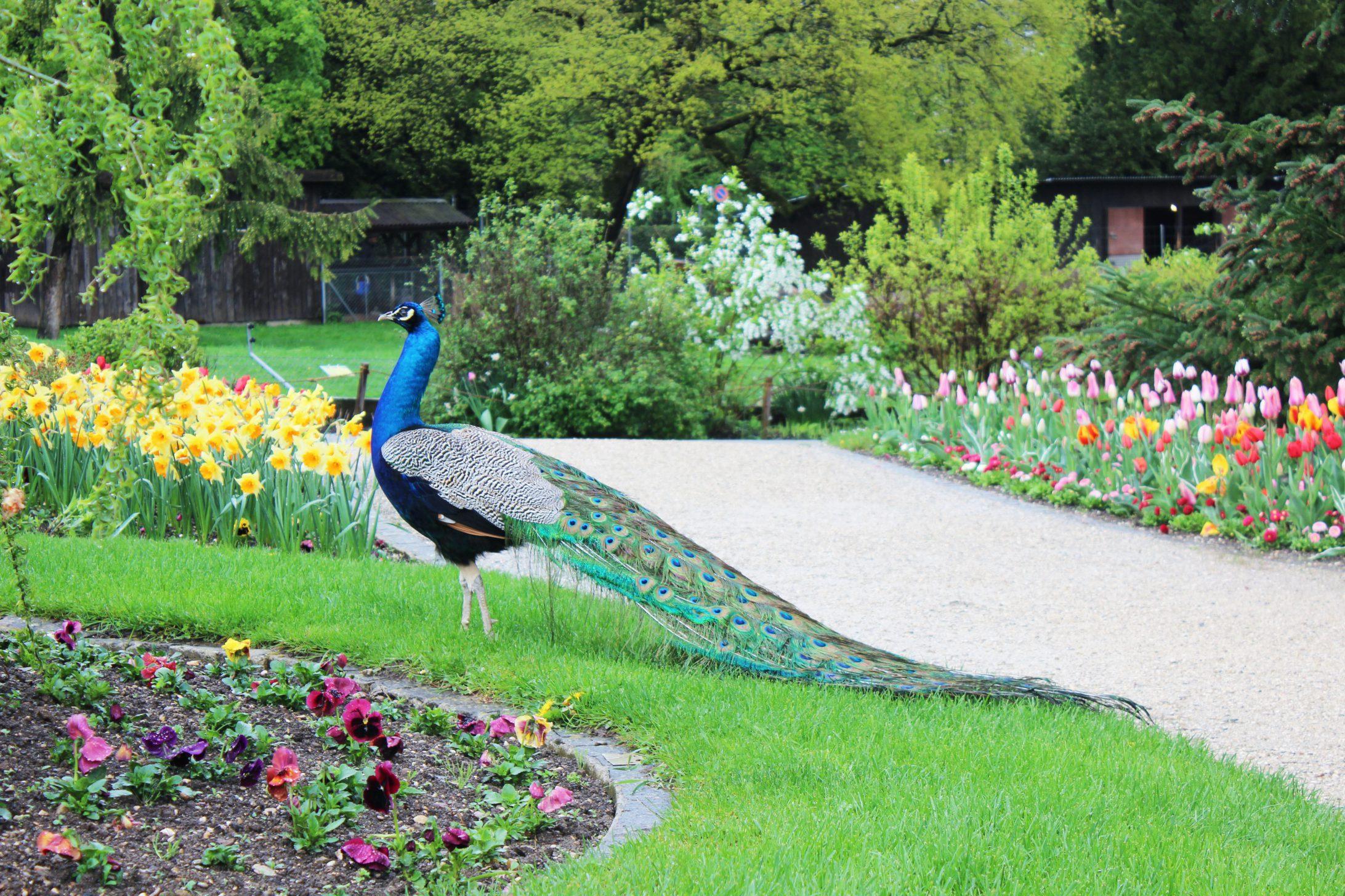 Un dimanche au jardin botanique de gen ve les petits for Jardin botanique geneve